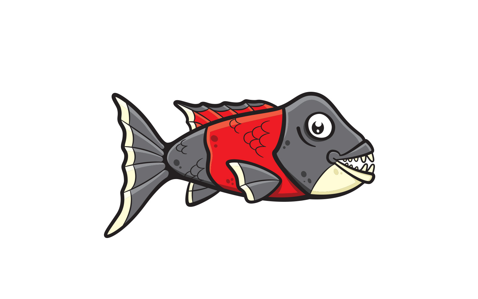 CISCOS California Sheephead Fish Illustration -- final digital version